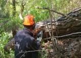 울진국유림관리소, 지역 산림병해충 예찰방제 대책본부 운영