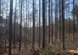 울진국유림관리소, 2021년 숲가꾸기사업 착수