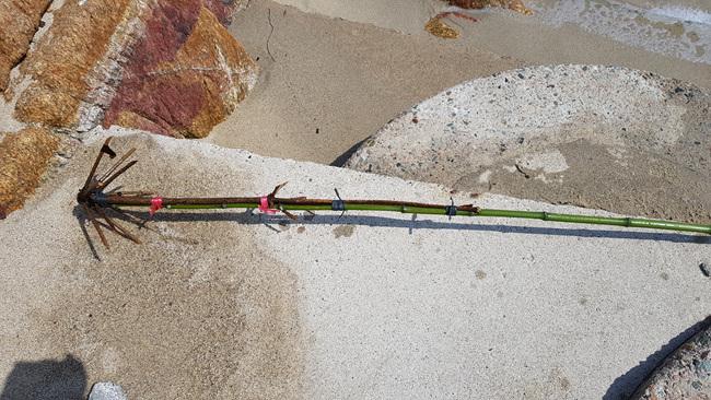 풍락초 (13).jpg